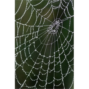 Web of Pearls
