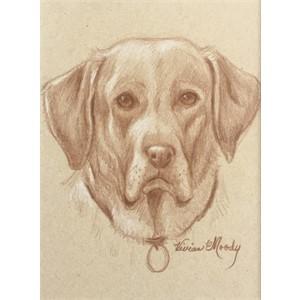Labrador drawing