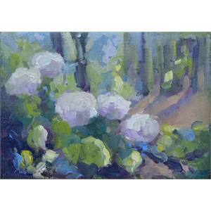 Hydrangeas in Sunlight