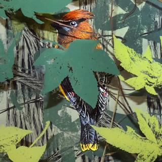 Pippin Frisbie-Calder