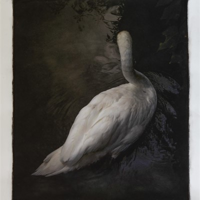 Ghosts and Other Visions, New Work by Kate Breakey