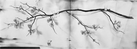 Qunice Branch