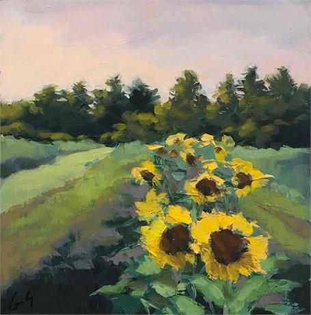 Sunflower Study II