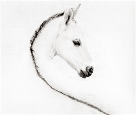 The Foal - 29 x 28 - Black Frame