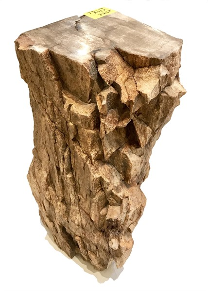 Rock Pedestal - Petrified Wood - JO#16