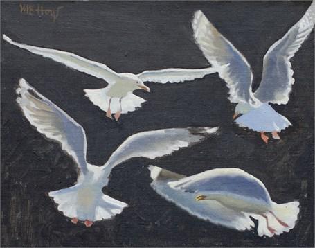 Gull Study I