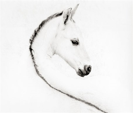 The Foal - Unframed 18