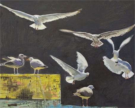 Gull Study IV