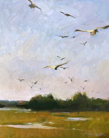 Marsh Gulls