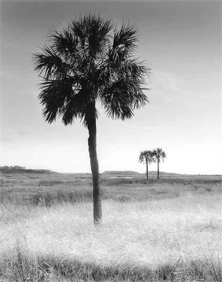 Palms 2 to 1