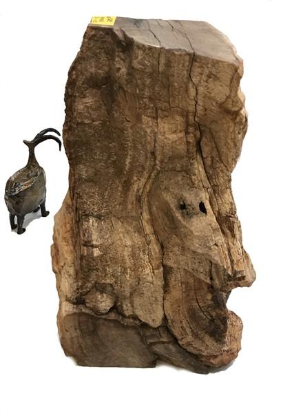 Rock Pedestal - Petrified Wood - JO#15