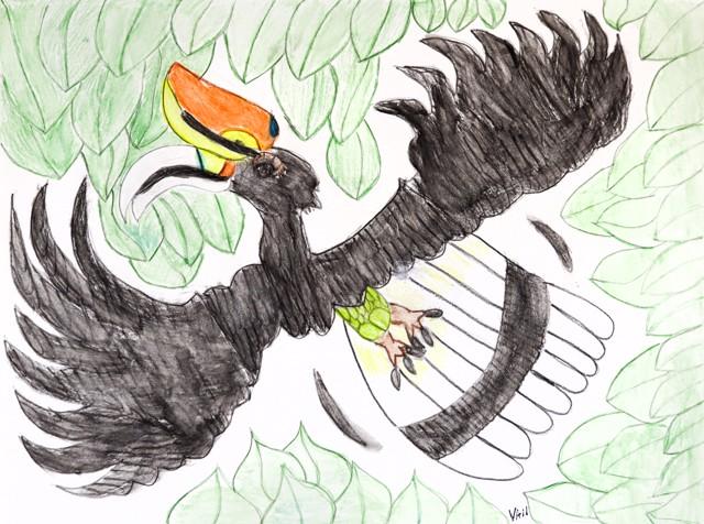 Rhinoceros Hornbill Sorawak Country's
