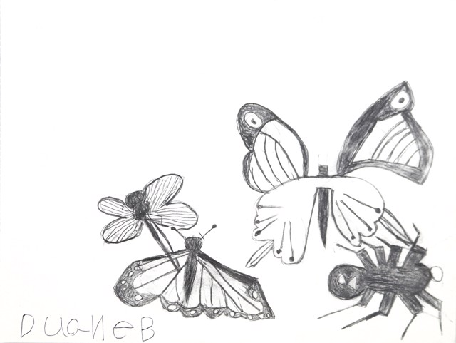 Butterflies and a Spider