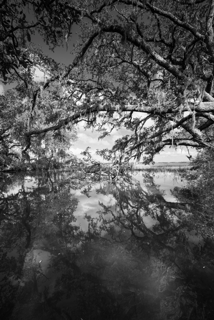 Wadmalaw Oak Reflection