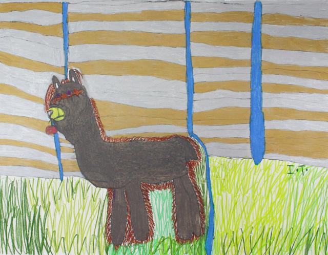 My Pet Llama