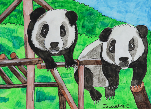 Baby Panda at Play