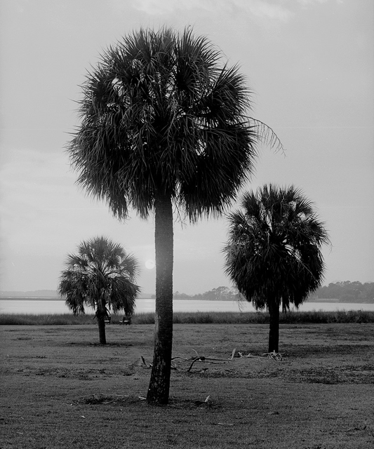 Palms of Three