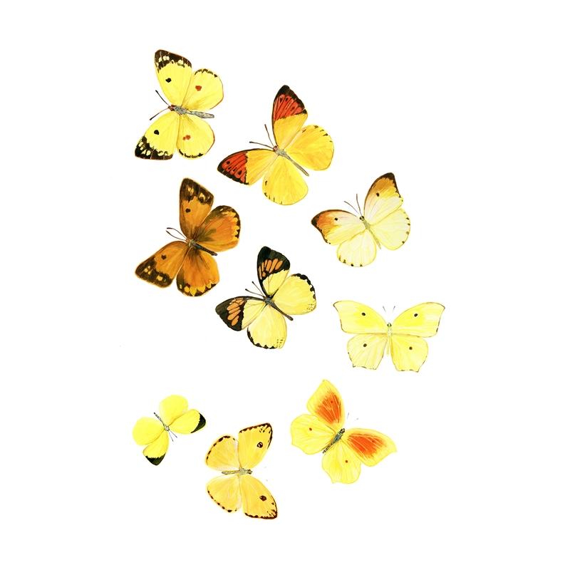 Fibonacci Butterflies