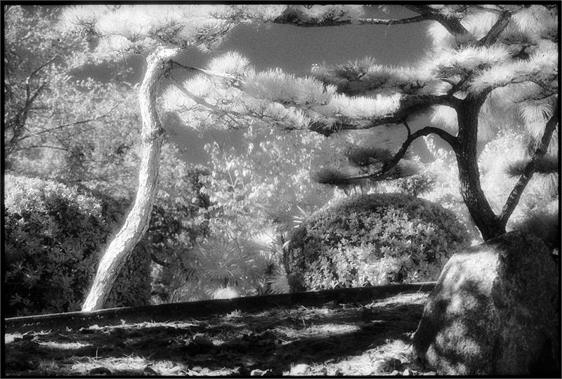 Huntington Gardens XXI (/41/50), 2012