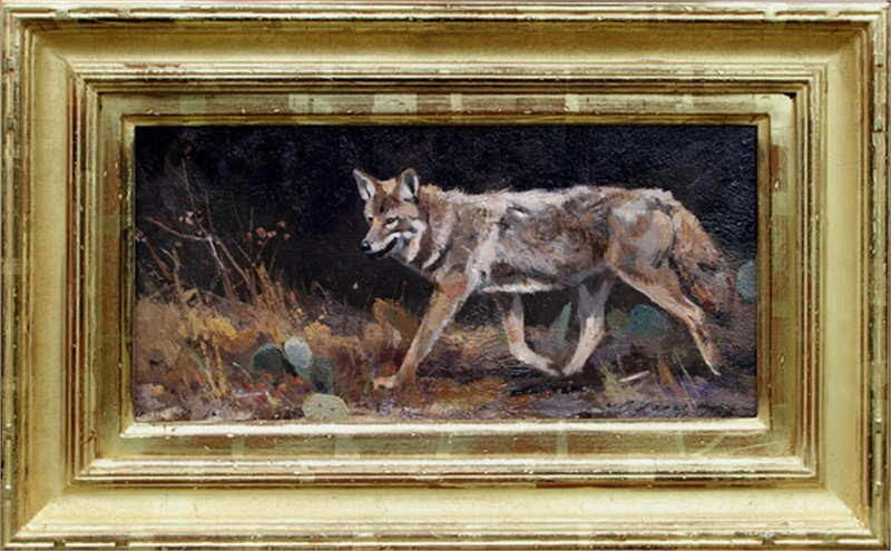 Roaming Coyote, 2018
