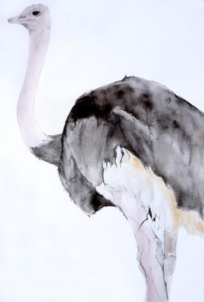 Medium Male Ostrich #1