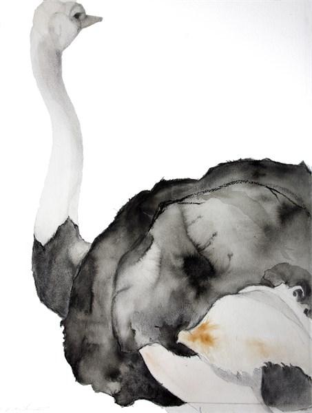 Male Ostrich - Profile