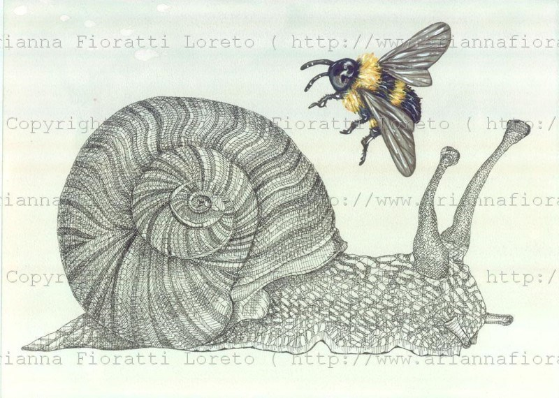 Snail with Bumble Bee