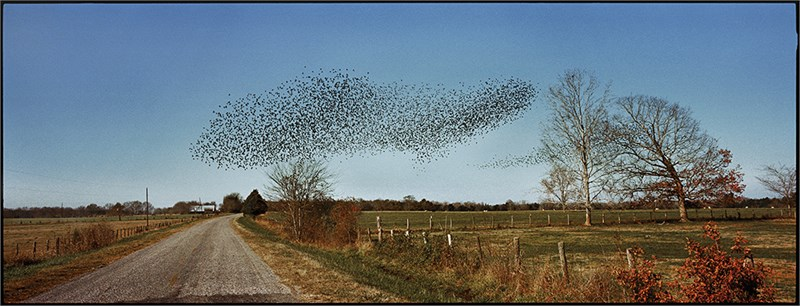 Birds, Perry County, AL