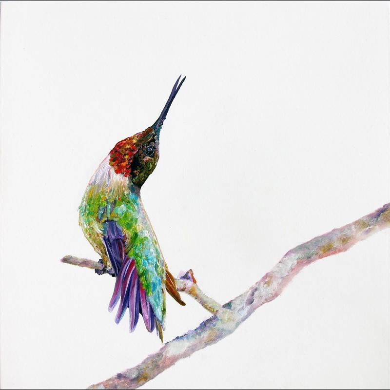 The Signal-Hummingbird on White Background, 2019