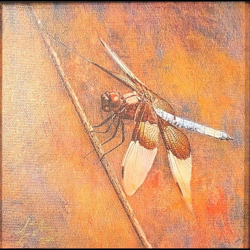 Dragon Fly-White