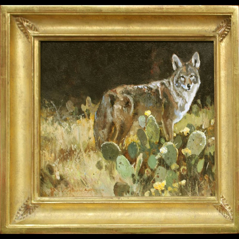 Coyote In Prickly Pear