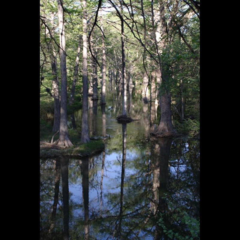 Spring Rains - Cypress Creek
