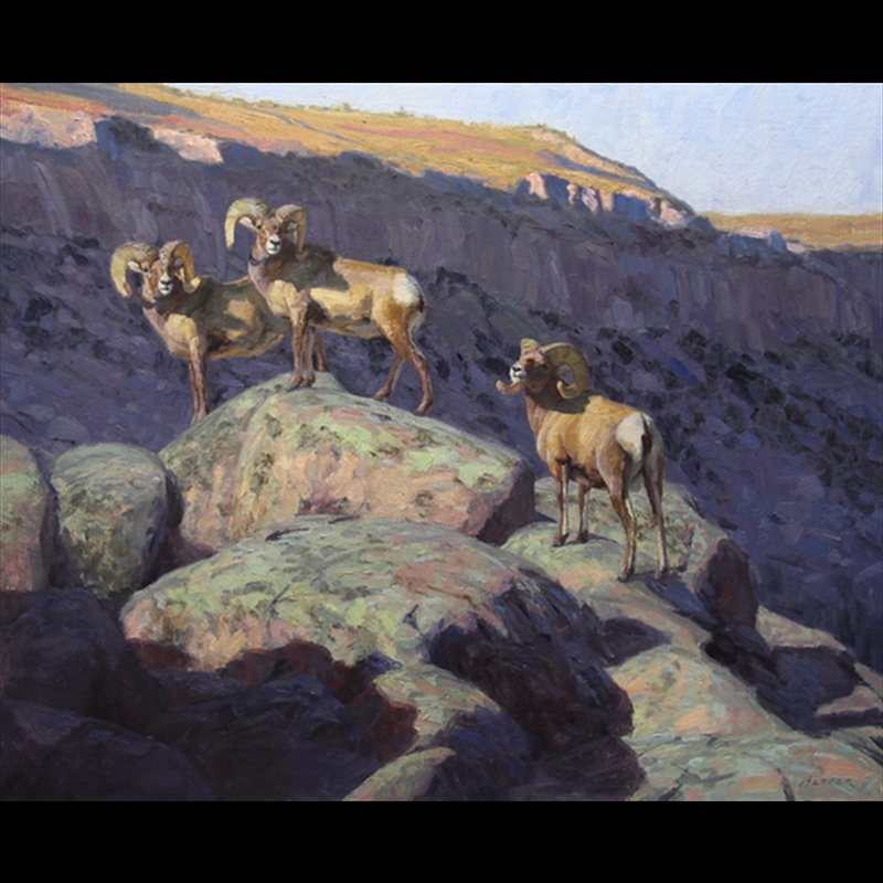 Canyon Shadows (Big Horn Sheep), 2015