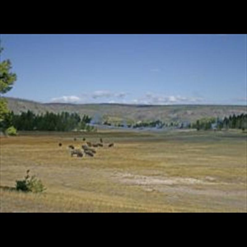 Summer Pasture - Snake River