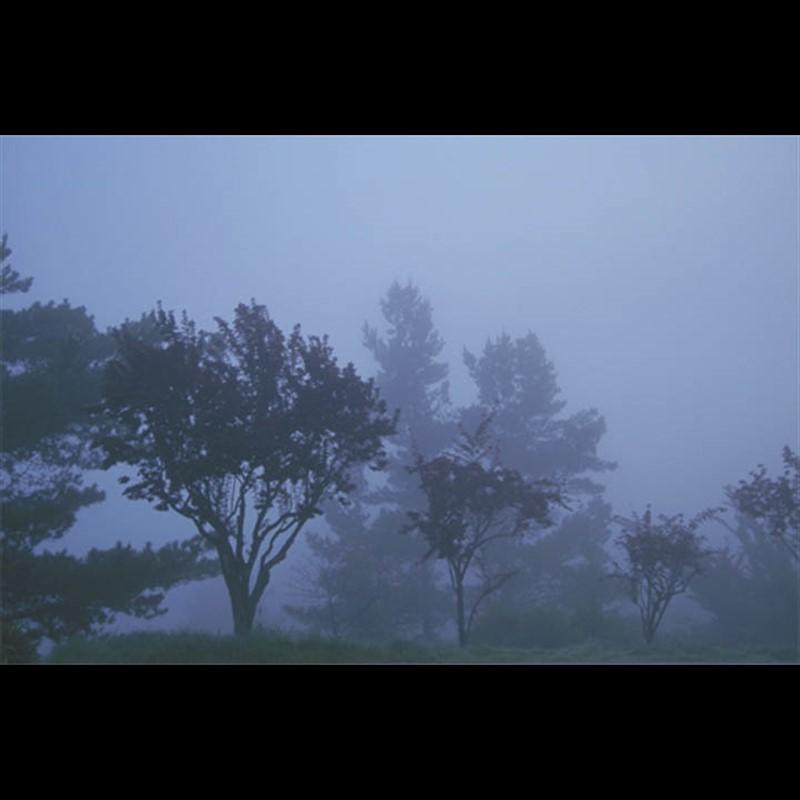Fade into Fog