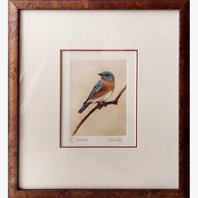Bluebird_F (85/100)