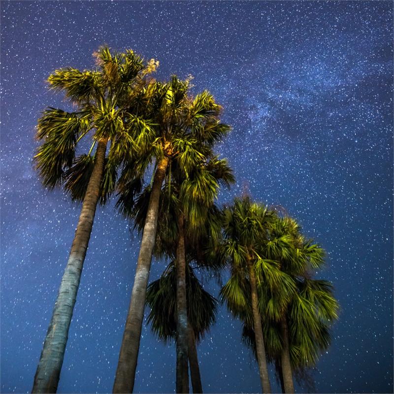 Palms by Sébastien Martinon