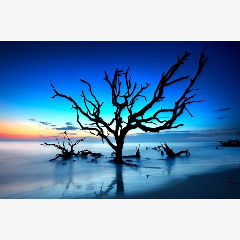 Break of Day (Driftwood Tree)