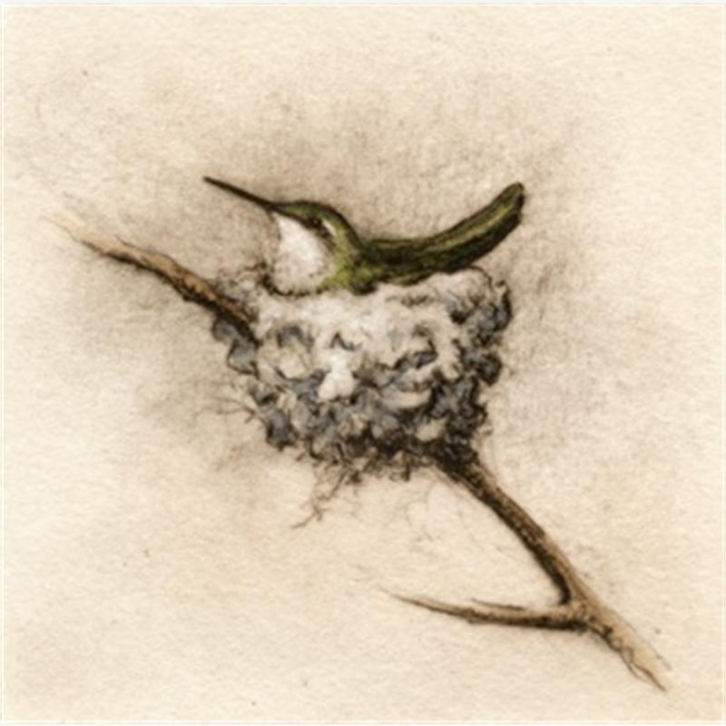 Nesting Hummer_UF (48/100)