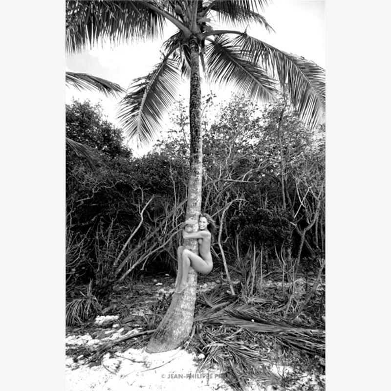 Elliot Coconut (1/25), 2007