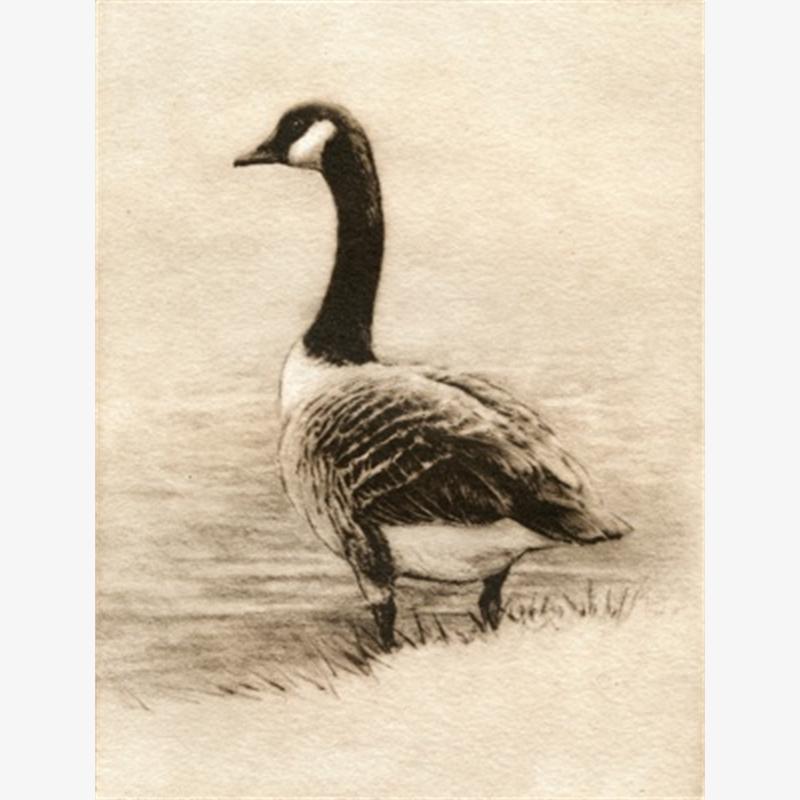 Canada Goose_UF (24/100)