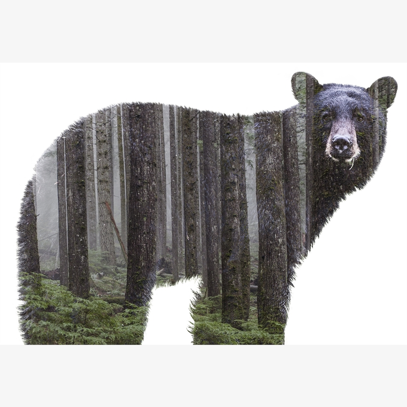 Fauna Bear (/12)