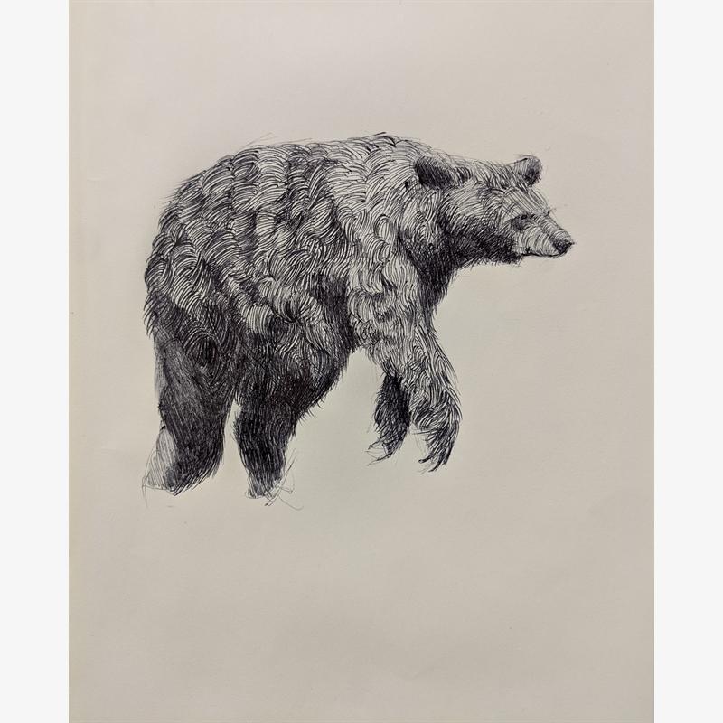 Bear by Caitlin Hurd