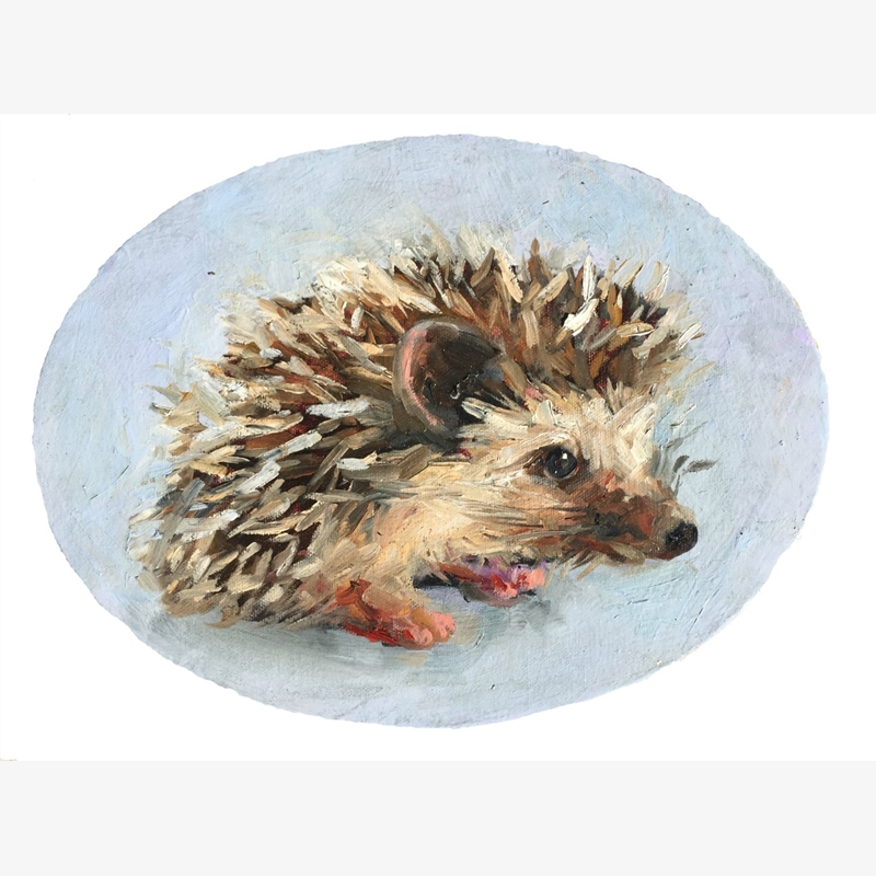 Hedgehog (HORIZ), 2016