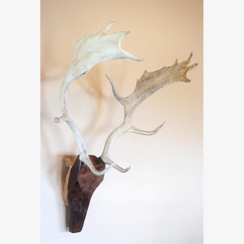 Fallow Deer, 2018