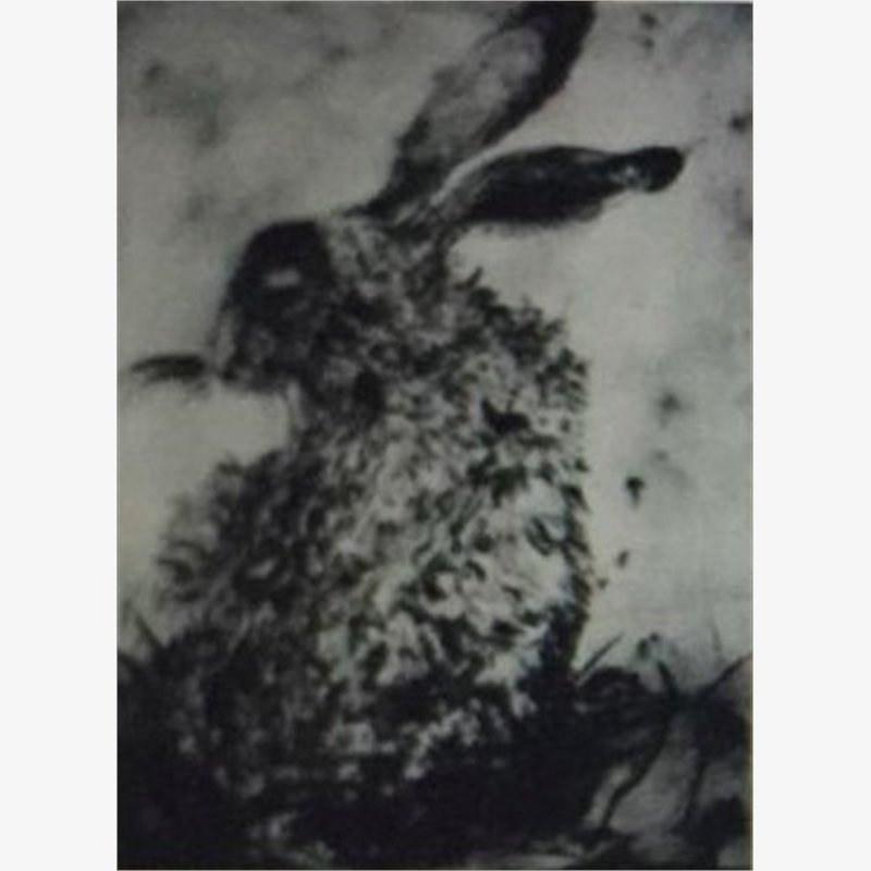 Shy Hare, 2009