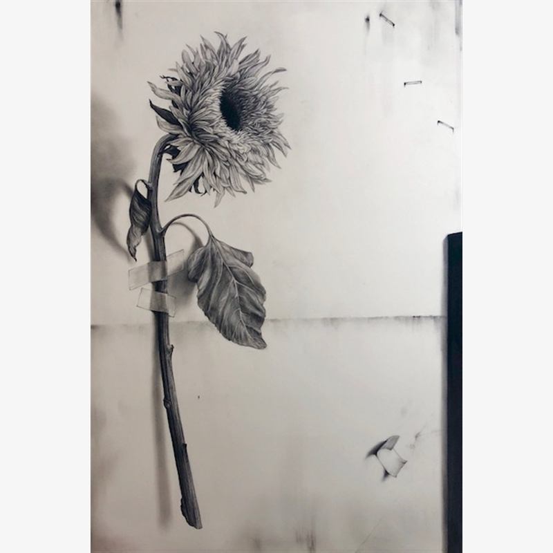 Sunflower with Tape, 2019
