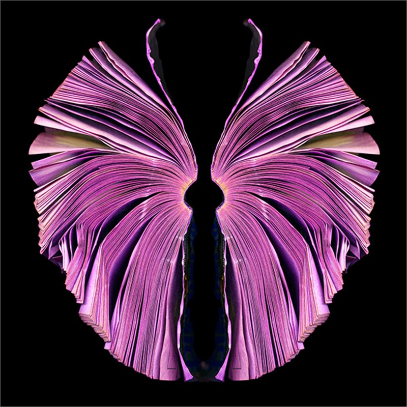 Pink Butterfly (8/9), 2011