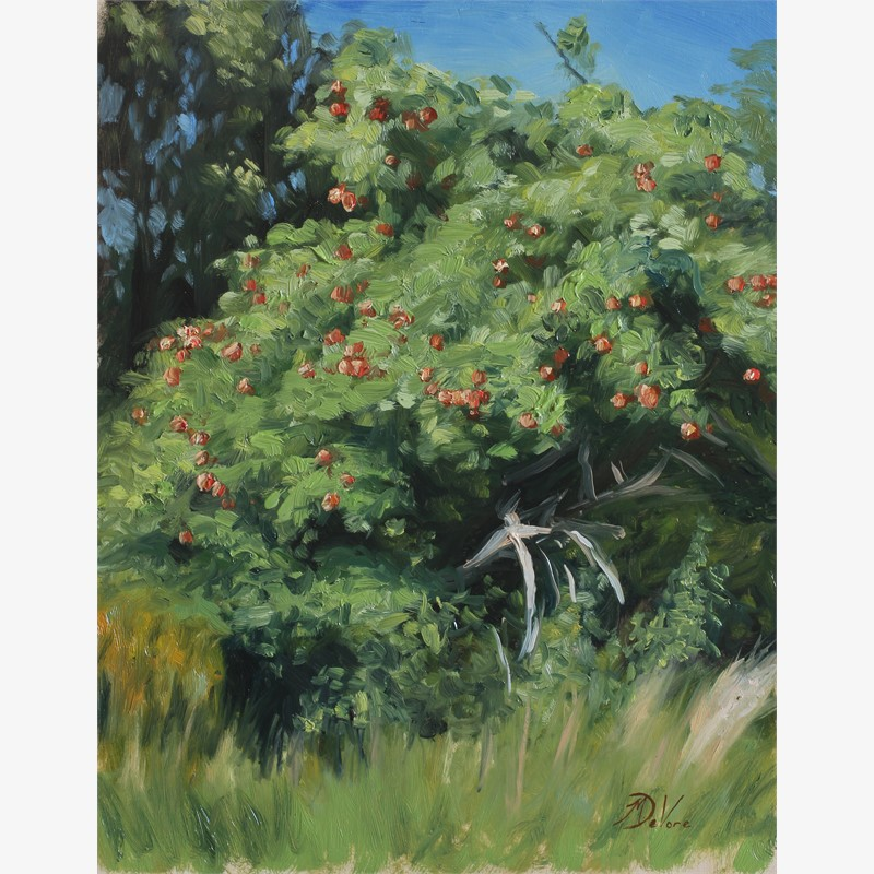 Apple Tree, 2016