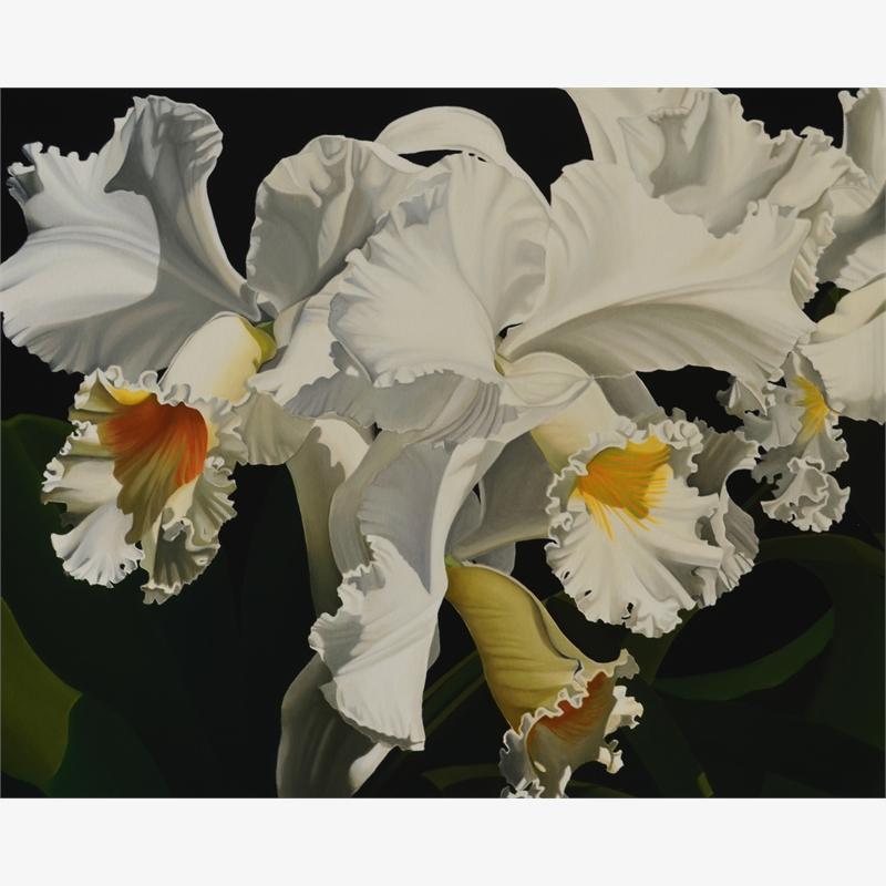 White Cattleya  Orchids (4/25), 2019